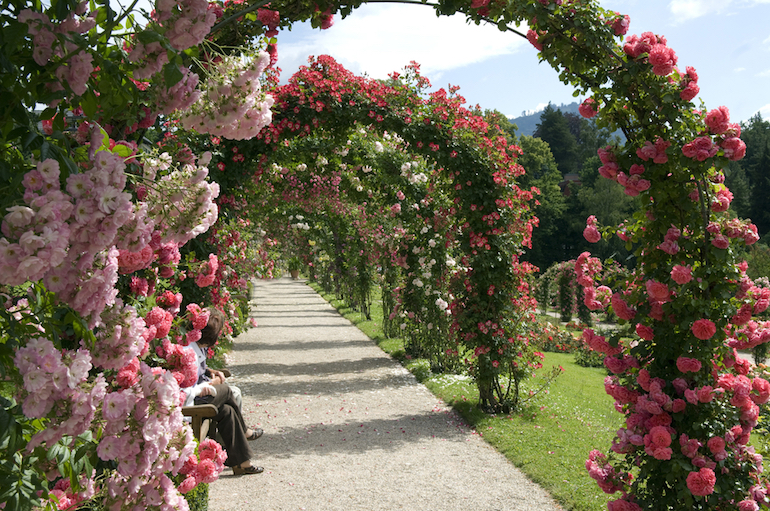 rose-covered-arches.jpg